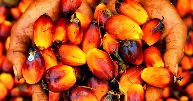 biofuel kelapa sawit
