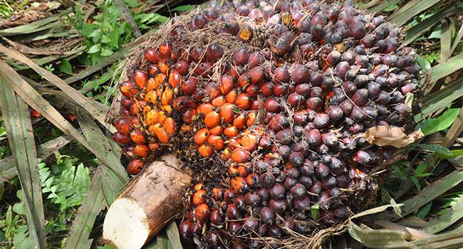 Sejarah kelapa sawit